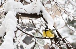 Die Meise, die auf Niederlassung des Baums an einem Schneewintertag sitzt stockbild