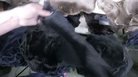 Die mit Pelz besetzt Häute, die für das Nähen vorbereitet werden, erhalten durch weibliche Hände verlagert stock video footage