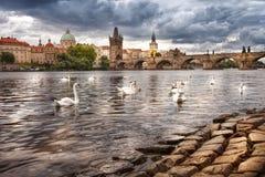 Die Mitte von Prag, von Fluss und von Höckerschwänen Stockfoto