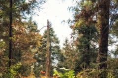 Die Monarchfalter-Biosphären-Reserve, Michoacan, Mexiko Stockbilder