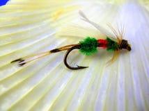 Die Muschel u. die Fliege Stockfoto