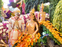 Die Musterbangkok-Orchideen 2014 Stockfotos