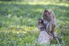 Die Mutter des Makakens, die ihr Auge schließt Stockfotografie