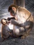 Die Mutter und das Kind Stockbild