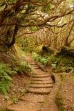 Mysteriöse Treppe Lizenzfreies Stockbild
