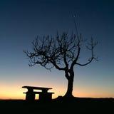 Die Nacht ist angekommen und der Baum nimmt vom Tag Abschied Lizenzfreies Stockbild