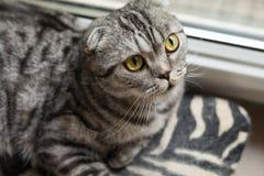Die Nahaufnahme des Sitzens der dunklen Katze nahe bei dem Fenster Stockbild