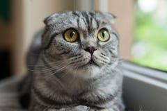 Die Nahaufnahme des Sitzens der dunklen Katze nahe bei dem Fenster Stockbilder