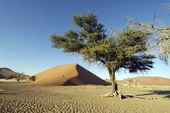 Die Namibische Wüste Stockfoto