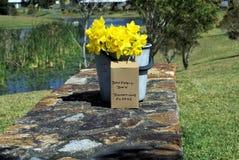 Die Narzissen blüht im Eimer im Park bitten um Spenden Stockfoto