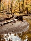 Die natürliche Seite von rustikalem Parma, Ohio - USA - OHIO lizenzfreie stockfotos