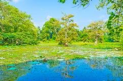 Die Naturdenkmäler von Sri Lanka Stockbilder