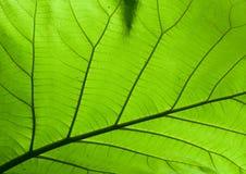 Die Naturdesignbeschaffenheit auf grünem Laub Lizenzfreies Stockbild