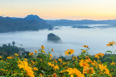 Die Nebel-und Sonnenaufgang-Zeit mit Maxican-Sonnenblume, Landschaft bei Phu Langka, Payao-Provinz, Thailand Stockbilder