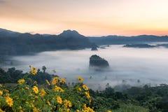 Die Nebel-und Sonnenaufgang-Zeit mit Maxican-Sonnenblume, Landschaft bei Phu Langka, Payao-Provinz, Thailand Lizenzfreie Stockfotografie