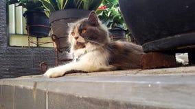 Die nette Katze lizenzfreie stockfotos