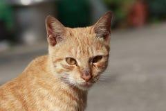 Die nette Katze Stockbilder