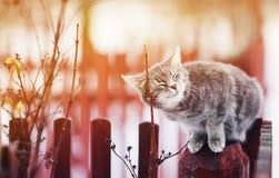 Die nette Katze, die auf dem Zaun gehätschelt wird, seine mustert geschlossenes vom Vergnügen lizenzfreie stockfotos