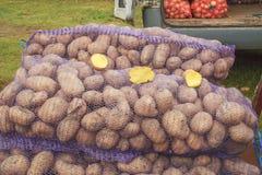 Die neue Ernte von Kartoffeln Lizenzfreies Stockbild