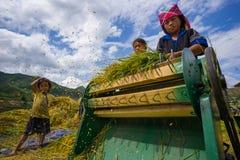 Die nicht identifizierten Landwirte erledigen Landwirtschaftsarbeit auf ihren Feldern am 13. Juni 2015 in MU Cang Chai, Yen Bai,  Lizenzfreie Stockbilder