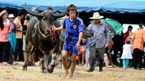 Die nicht identifizierten Männer steuern ihren Büffel für das Laufen in einen laufenden Sport Stockbilder