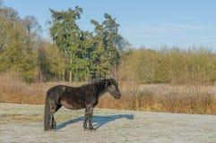 Die Niederlande - De Bilt stockfotos