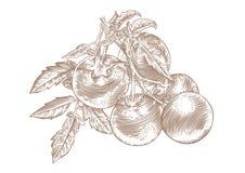 Die Niederlassung der Tomate mit Gemüse und Blättern stock abbildung
