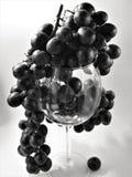 Die Niederlassung von roten Trauben im Schwarzweiss-Monochrom in der Studiobeleuchtung, die von den Glasweingläsern hängt Lizenzfreie Stockfotos