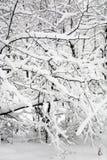 Die Niederlassungen der Anlagen werden mit Schnee umfasst Stockfotos