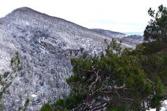 Die Niederlassungen der Bäume in den Bergen Stockfoto
