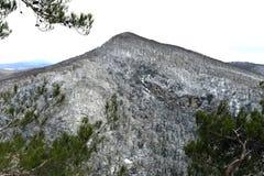 Die Niederlassungen der Bäume in den Bergen Stockfotos