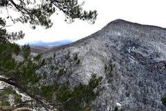 Die Niederlassungen der Bäume in den Bergen Lizenzfreie Stockfotografie