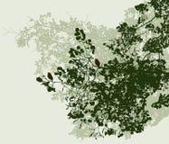 Die Niederlassungen der Lindenbäume im Sommer Lizenzfreies Stockfoto