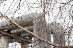 Die Niederlassungen des Baums und der großen Rohre Stockbilder