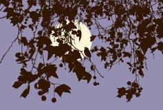 Die Niederlassungen des Obstbaumes in der Herbstnacht Vektor Abbildung