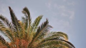 Die Niederlassungen einer Palme gegen den blauen Himmel stock video