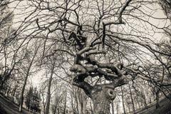 Die Niederlassungen eines Baums Mädchen versteckt sich im Hemd eines Mannes Lizenzfreie Stockfotos