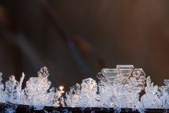 Die Niederlassungen eines Busches im Winter, umfasst mit Reifmakroschuß Lizenzfreies Stockfoto