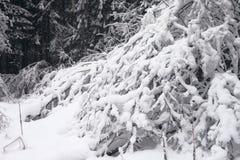 Die Niederlassungen im Schnee Lizenzfreie Stockfotos