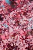 Die Niederlassungen und die Blätter der Berberitzenbeere Stockbild