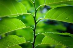 Die Niederlassungen von Bäumen im Regen Lizenzfreies Stockfoto