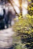 Die Niederlassungen von Büschen beleuchteten mit der Sonne Stockfoto