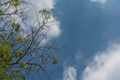 Die Niederlassungen werden gelassen und der Himmel wird bewölkt Stockfotografie