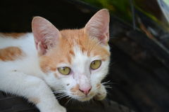 Die Niedlichkeit von Katzen Lizenzfreies Stockbild