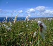 Die Oan Halbinsel, Islay, Schottland Lizenzfreie Stockfotos