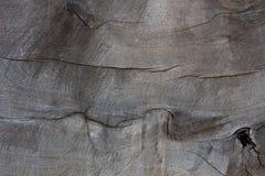 Die Oberfläche der großen Bäume, die Privatisierung mit trac waren Lizenzfreie Stockfotos