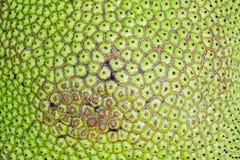 Die Oberfläche der Jackfruitfrucht Stockfotografie