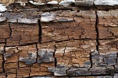 Die Oberfläche des alten Baums Stockbild