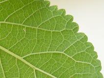 Die Oberfläche des Blattes Stockfotos