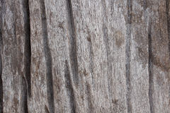 Die Oberfläche des hölzernen Sprunges weil Feuchtigkeit Lizenzfreie Stockbilder